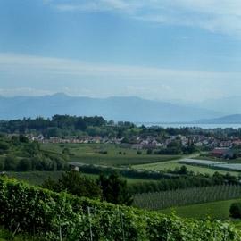 Weinbau Alois Rottmar (Kressbronn) - Bodensee