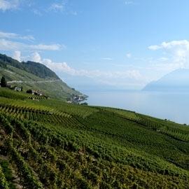 Region Lavaux (Schweiz)
