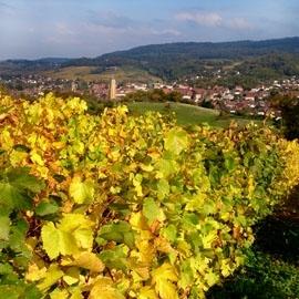 Frankreich - Arbois (Jura