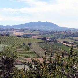 Colli di Rimini